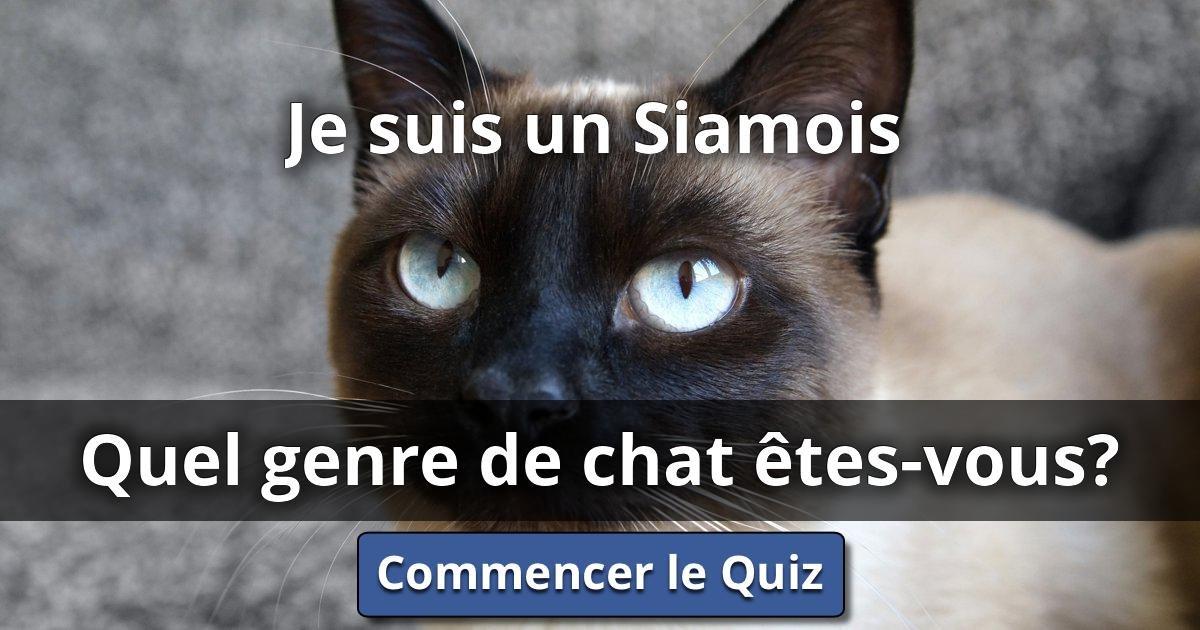 Je suis un siamois quel genre de chat tes vous lusorlab quizzes - Quel dormeur etes vous ...