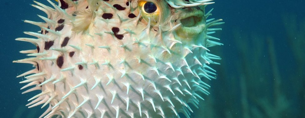 What kind of ocean animal are you?