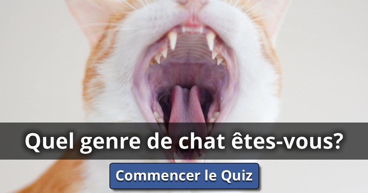 Quel genre de chat tes vous lusorlab quizzes - Quel dormeur etes vous ...
