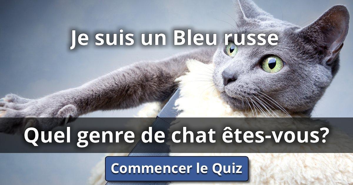 Je suis un bleu russe quel genre de chat tes vous lusorlab quizzes - Quel dormeur etes vous ...